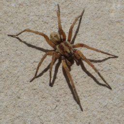 Уничтожение пауков в Коломне